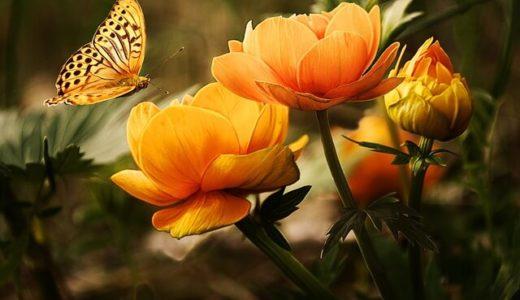 花柄が好きな人の心理!男性と女性の性格を徹底解説